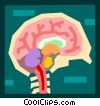 Vector Clipart picture  of a medical/the brain