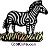 Vector Clip Art graphic  of a zebra