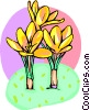 Vector Clipart illustration  of a Crocus's