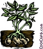 Potatoes, woodcut style Vector Clipart illustration