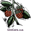 Vector Clipart graphic  of a raspberries