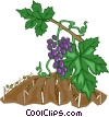 Vector Clip Art image  of a grape vines