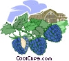 blackberry farming Vector Clip Art picture