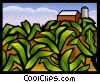 Corn field Vector Clip Art picture
