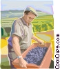 Farmer with grapes Vector Clipart image