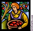 Vector Clip Art image  of a person picking apples
