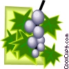 Vector Clip Art graphic  of a grapes on the vine