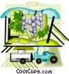 Vector Clip Art image  of a wine production and harvesting
