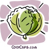 cabbage, vegetable Vector Clipart picture