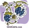 grapes on the vine Vector Clip Art image
