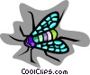 Vector Clip Art image  of a colorful fly