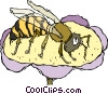 wasp Vector Clipart illustration