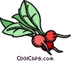 radish, vegetable Vector Clipart image