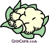 Vector Clip Art graphic  of a cauliflower