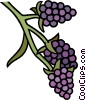 Vector Clip Art image  of a grapevine