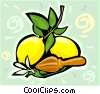 Lemons on branch Vector Clip Art picture