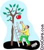 man using a ladder to reach the last apple Vector Clip Art graphic