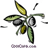 coffee beans growing on the plant Vector Clipart image