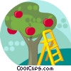 Vector Clipart picture  of an Apple tree with ladder