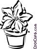Christmas poinsettia Vector Clip Art picture