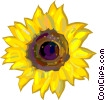 Vector Clip Art graphic  of a Sunflowers