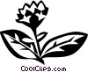 oregano Vector Clipart picture