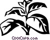 basil Vector Clipart illustration