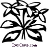 sweet woodruff Vector Clipart graphic