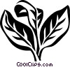 Vector Clipart graphic  of a oregano