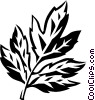 Vector Clipart image  of a box elder