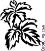 Virginia creeper Vector Clipart image
