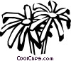 Vector Clip Art image  of a pyrethrum