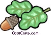 Vector Clip Art image  of an acorn nut