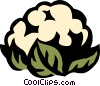 Vector Clipart picture  of a cauliflower