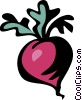 radish Vector Clip Art graphic