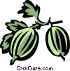 gooseberries Vector Clipart picture