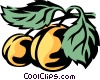 apricots Vector Clipart illustration