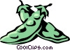 snow peas Vector Clipart graphic