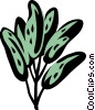 sage Vector Clipart graphic