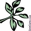Vector Clip Art graphic  of a marjoram