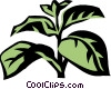 Vector Clip Art graphic  of a basil
