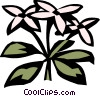 sweet woodruff Vector Clipart illustration