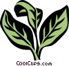 Vector Clipart picture  of a oregano