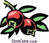 Vector Clip Art image  of a cranberry