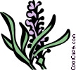 Vector Clip Art graphic  of a lavender
