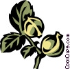 Vector Clip Art graphic  of a hickory