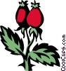 rosehips Vector Clipart illustration