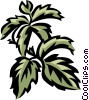 Vector Clip Art graphic  of a Virginia creeper