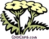 Vector Clip Art image  of a yarrow