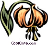 Vector Clip Art graphic  of a Turk's cap lily